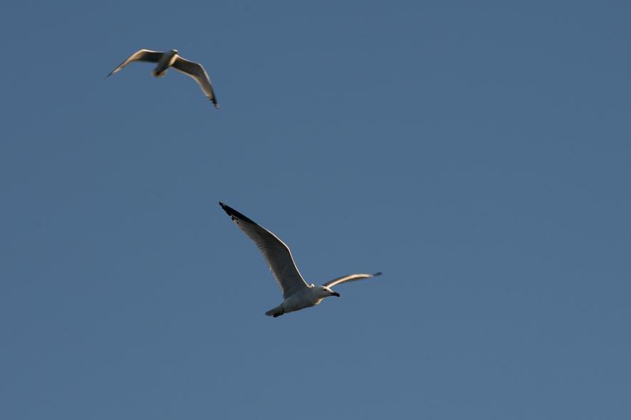 ptice3